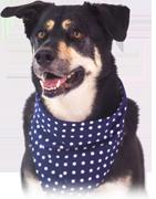 croquette pour chien de chasse et chien de travail