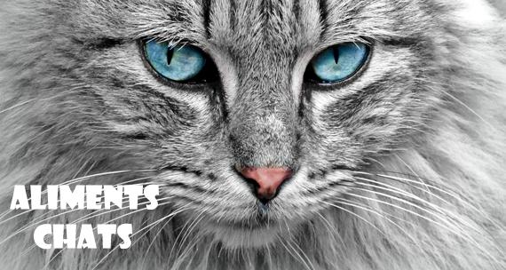 Pour les Chats